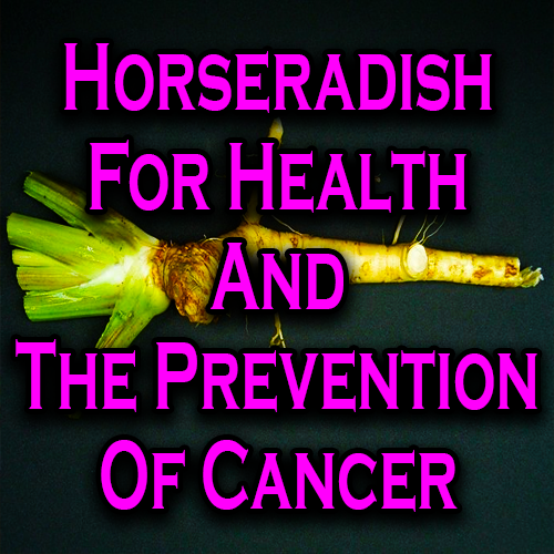 Horseradish For Health And The Prevention Of Cancer