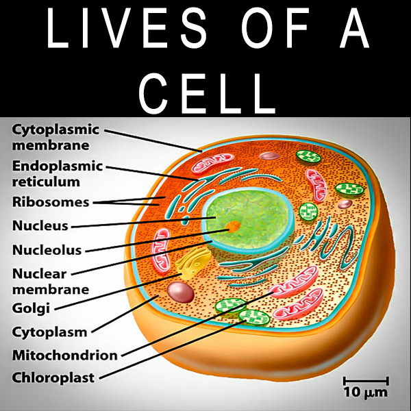 LIVES-OF-A-CELL