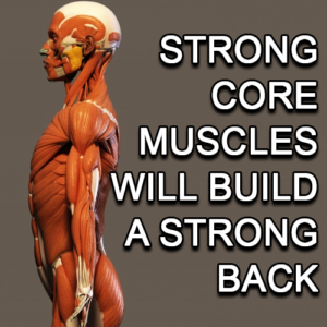 Strong Core Muscles Will Build A Strong Back