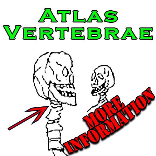 Atlas Vertebrae More Information