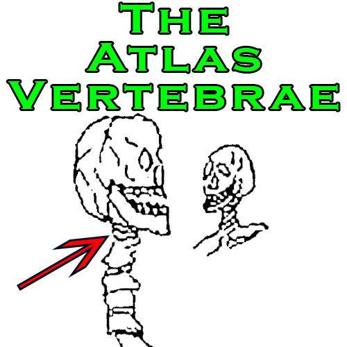 The Atlas Vertebrae