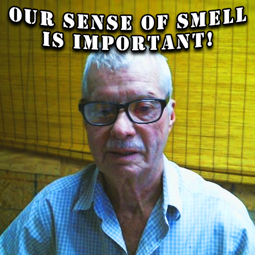 Our Sense Of Smell Is Important