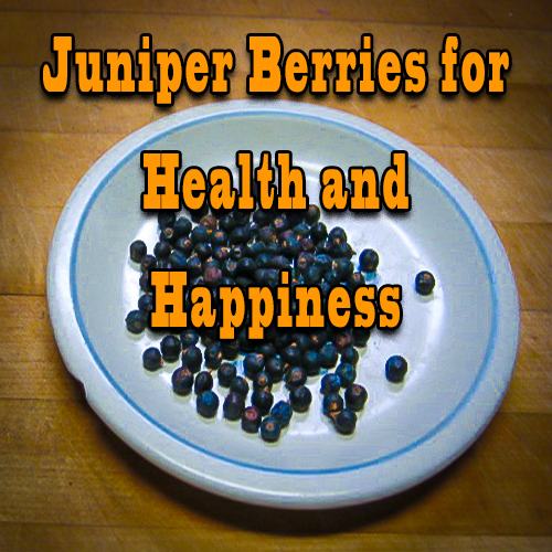 Juniper Berries for Health and Happiness