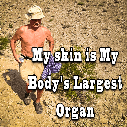 My skin is My Body's Largest Organ