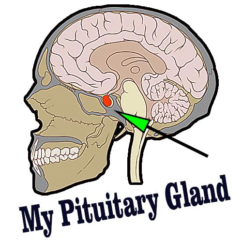 My Pituitary Gland